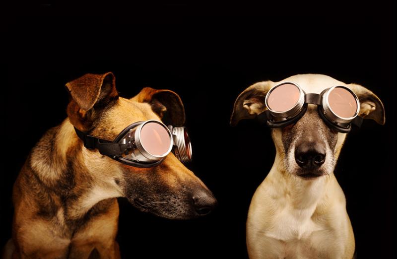 fotografias caninas por Elke Vogelsang