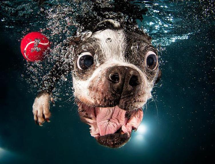 Fotografias subaquáticas de cachorrinhos