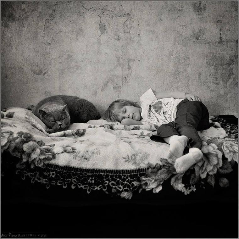 Amizade entre garotinha e um gato gorducho
