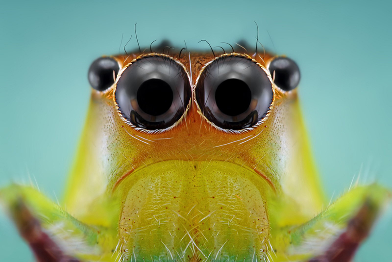 macrofotografias de insetos-Donald-Jusa
