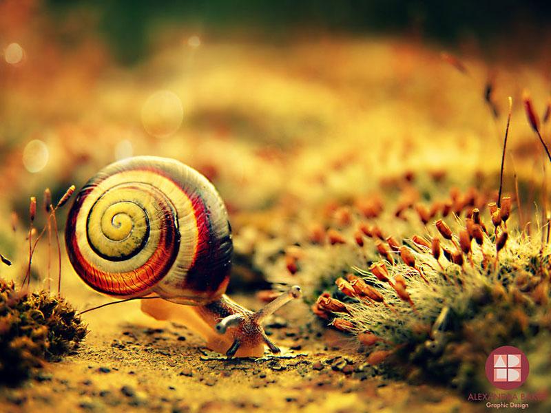 As melhores fotografias de insetos de Alexandra Baker - Caramujo