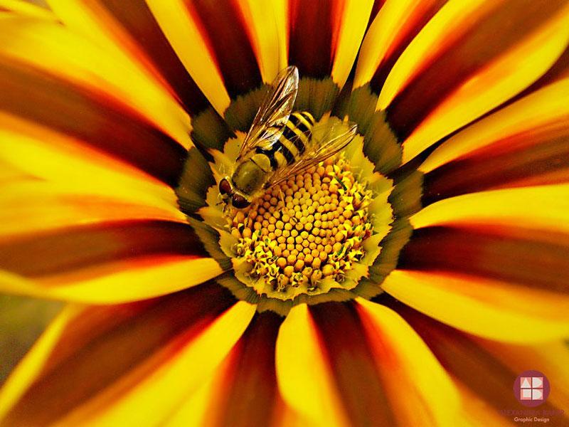 As melhores fotografias de insetos de Alexandra Baker - Abelha