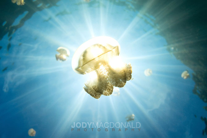 Sunrays-through-jellyfish-Palau