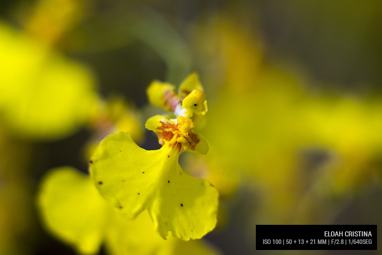 Lente Canon 50 mm + 13 mm + 21 mm