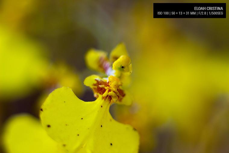 Lente Canon 50 mm + 13 mm + 31 mm