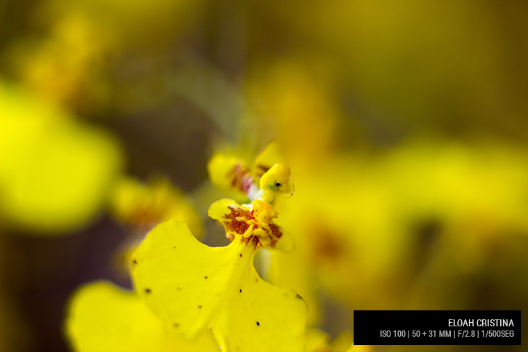Lente Canon 50 mm + 31mm