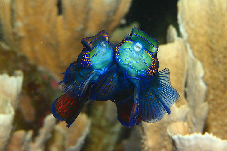 Fotografias subaquáticas na Indonésia