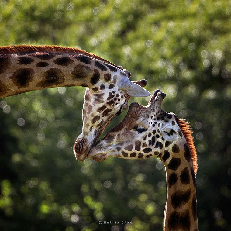 Animais silvestres por Marina Cano