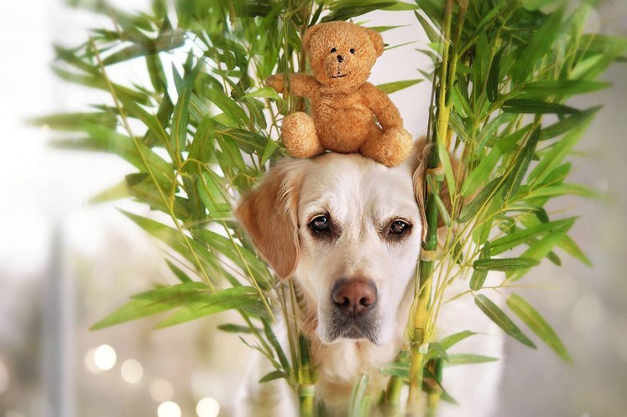 As aventuras de Mali e seu urso de pelucia